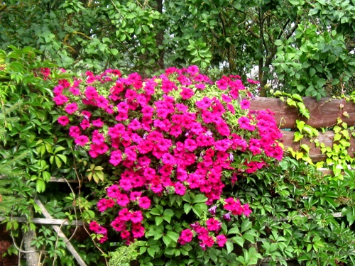 Комнатные растения каталог фото и